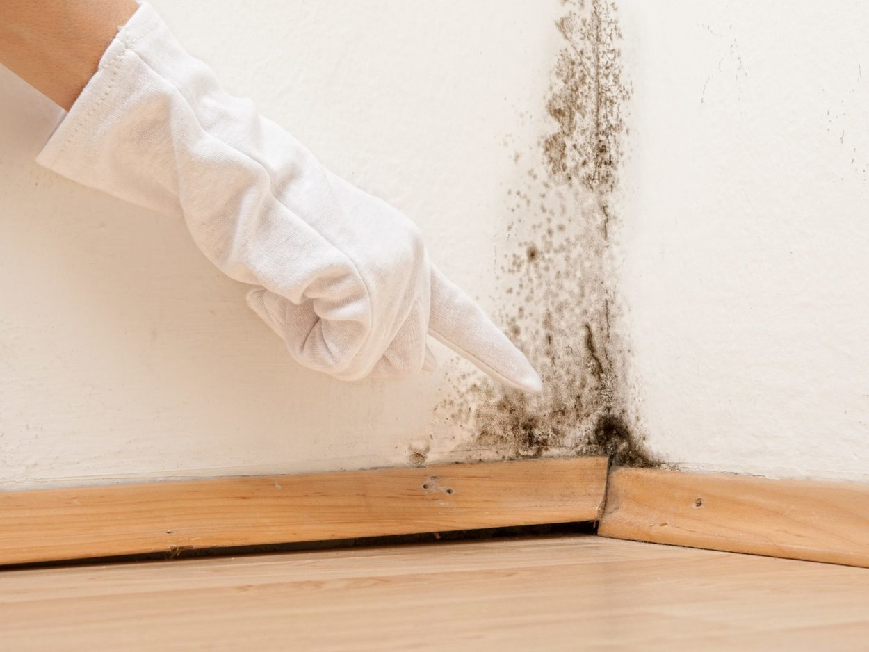 Mold removal restoration Sioux Falls, SD